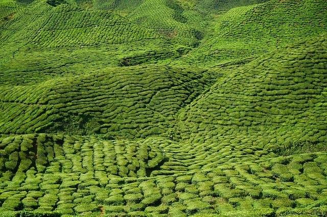अंतर्राष्ट्रीय चाय दिवस 2020: International Tea Day in hindi